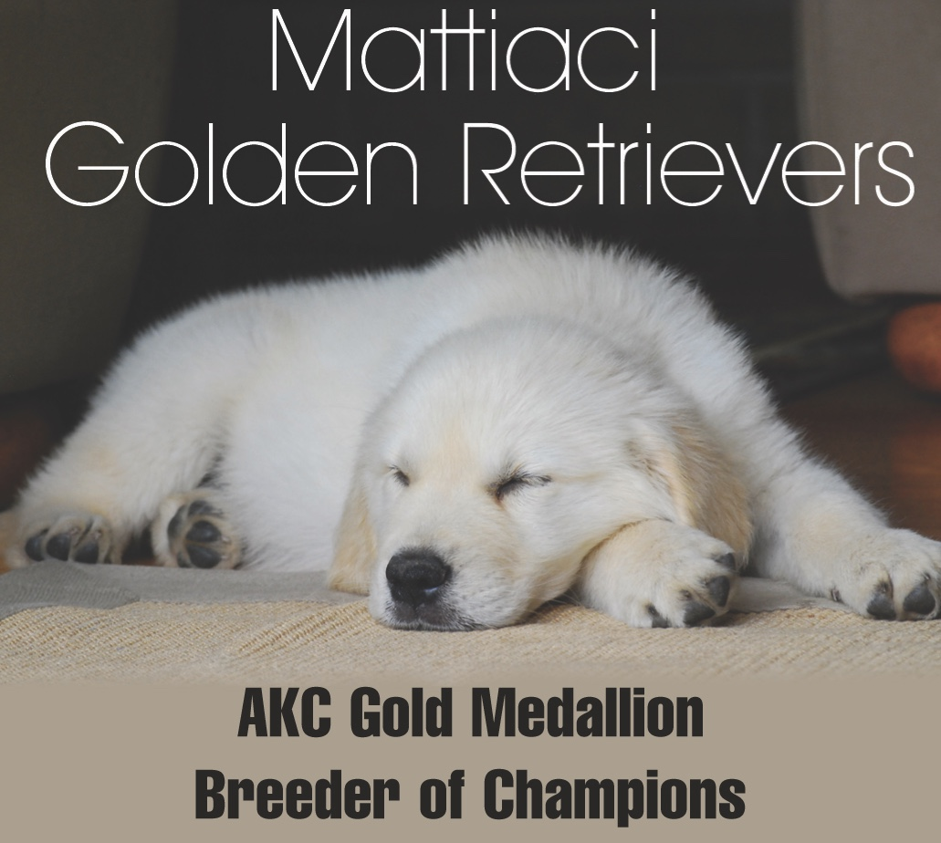 Mattiaci Golden Retrievers of Montana